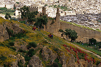 Fez, Morocco - Drying Dyed Animal Skins on the Hillside near the Merinid Tombs.