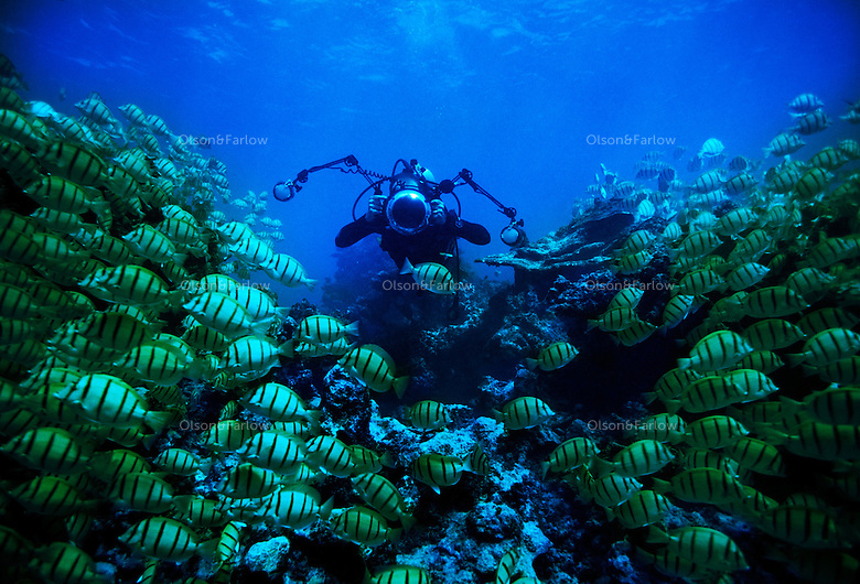 "Photographer Randy Olson diving in the military canal, Palmyra Atoll.  Olson and Gary Bell were the first to dive this area under the auspices of the Nature Conservancy. The largest purchase to date for the Nature Conservancy is the Palmyra an atoll situated about 300 miles north of the equator.  Palmyra has five times as many coral species as the Florida Keys and three times as many as Hawaii.  It is home to the world's largest invertebrate, the rare coconut crab, and a population of red-footed booby birds second only to that of the Galapagos.  It is the last marine wilderness area left in the U.S. tropics and is home to the last remaining stands of Pisonia grandis beach forest in the world.  Palmyra was a US Navy supply base in World War II, the site of a proposed nuclear waste dump, an unsuccessful coconut plantation and of various development schemes.  Palmyra is most famous for the 1974 slaying  of a married couple which became the subject of the best-selling book ""And the Sea Will Tell,"" by Vincent Bugliosi."