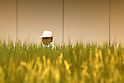 July 12, 2010 - Tokyo, Japan - A visitor is seen behind a rice paddy located inside the 'Urban Farm Pasona Group Headquaters' in Tokyo, Japan, on July 12, 2010. Aiming for an amicable working environment with 'Symbiosus with Nature' as a concept, more than 200 types of fruits and vegetables grow in the nine-floor building's verandas.