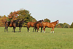 Mares and foals at Bright View Farm in Chesterfield, New Jersey.  Photo By Bill Denver/EQUI-PHOTO.