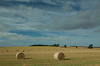 Hay Bales near Smailholm, Scottish Borders