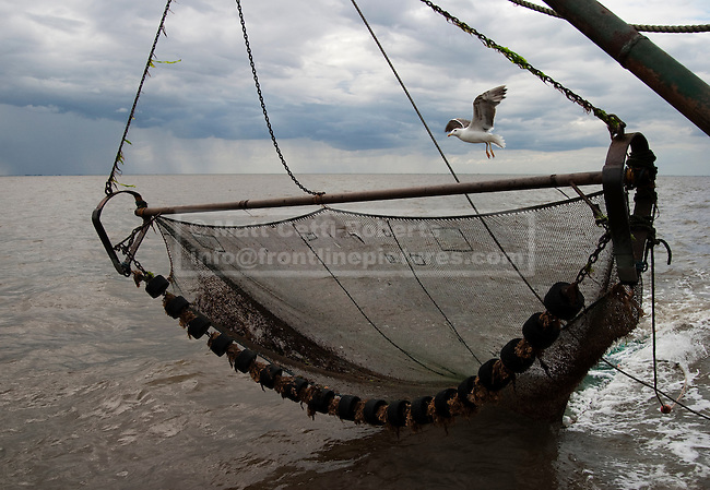 While Peter and Jamie sift through a catch, a seagull hovers over a net waiting to be dropped back into the sea.