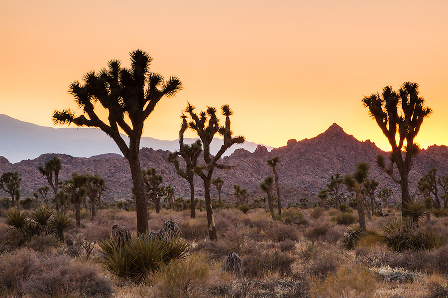 The sunset creates a reddish-orange afterglow in the smoky skies above Joshua Tree National Park.