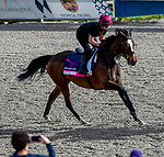 January 24, 2020: Magic Wand gallops as horses prepare for the Pegasus World Cup Invitational at Gulfstream Park Race Track in Hallandale Beach, Florida. John Voorhees/Eclipse Sportswire/CSM