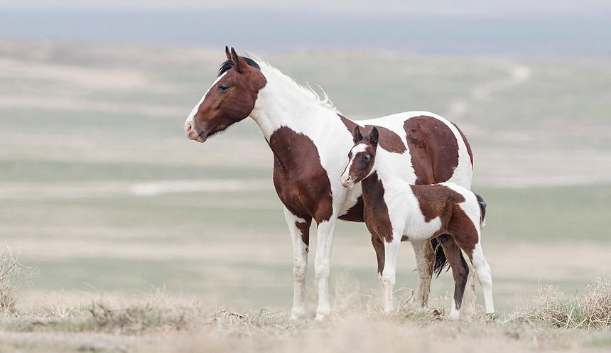 Wild Horse, Utah West Desert