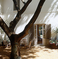 A giant Tipuana tipu tree towers over one of several shady courtyards which are to be found around the property
