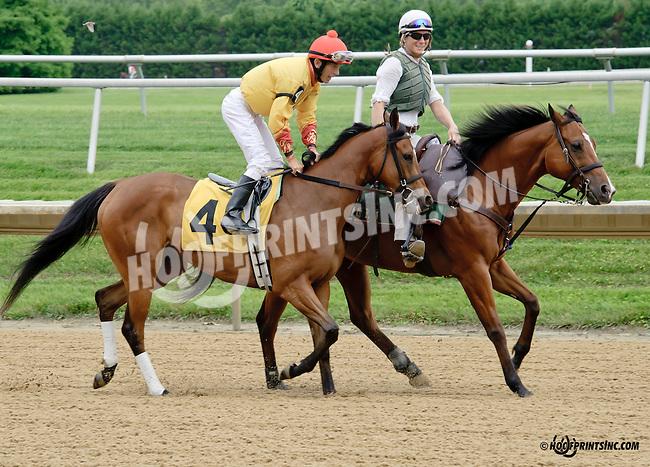 Tahaddi at Delaware Park racetrack on 6/21/14