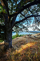 Looking down on Massacre Bay from under a Garry oak tree and grassy meadow on Turtleback Mountain, Orcas Island, Washington, USA