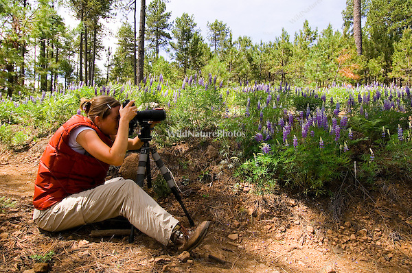 Woman photographing flowers in the mountains (MR)