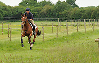 Gallops/Canter tracks