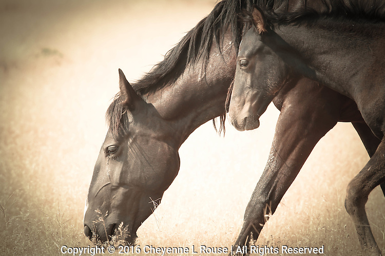 Motherhood - Wild Horse and baby - Utah