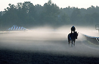 Saratoga Race Course morning. Saratoga Race Course, Saratoga Racetrack, beautiful horse racing, Thoroughbred racing, horse, equine, racehorse, morning mood