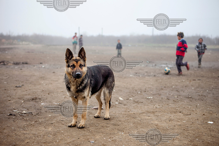 A dog stands near a group of children playing football in the Roma settlement located in 'Budulovskej Street'.