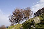 Europa, DEU, Deutschland, Baden Wuerttemberg, Schwarzwald, Schauinsland, Naturpark Suedschwarzwald, Hofsgrund, Typische Landschaft, Herbst, Baeume, Buchen, Windbuchen, Weg, Feldweg, Felsen, Stein, Kategorien und Themen, Natur, Umwelt, Landschaft, Jahreszeiten, Stimmungen, Landschaftsfotografie, Landschaften, Landschaftsphoto, Landschaftsphotographie, Tourismus, Touristik, Touristisch, Touristisches, Urlaub, Reisen, Reisen, Ferien, Urlaubsreise, Freizeit, Reise, Reiseziele, Ferienziele....[Fuer die Nutzung gelten die jeweils gueltigen Allgemeinen Liefer-und Geschaeftsbedingungen. Nutzung nur gegen Verwendungsmeldung und Nachweis. Download der AGB unter http://www.image-box.com oder werden auf Anfrage zugesendet. Freigabe ist vorher erforderlich. Jede Nutzung des Fotos ist honorarpflichtig gemaess derzeit gueltiger MFM Liste - Kontakt, Uwe Schmid-Fotografie, Duisburg, Tel. (+49).2065.677997, ..archiv@image-box.com, www.image-box.com]