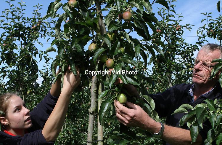 Foto: VidiPhoto..RESSEN - Personeel van fruitteler Nico van Olst uit het Betuwse Ressen verwijdert maandag overtollige appeltjes. Het zogenoemd handmatige dunnen is nodig om de overgebleven appeltjes meer licht en ruimte te geven voor groei. Tevens wordt de slechtere kwaliteit er tussenuit geplukt. Zo'n 20 procent van het fruit wordt op deze wijze voortijdig verwijderd. Van Olst is zo'n drie weken bezig om zijn 20 ha. appels en peren te 'dunnen'. Fruittelers verwachten dit jaar een hoge productie van goede kwaliteit..