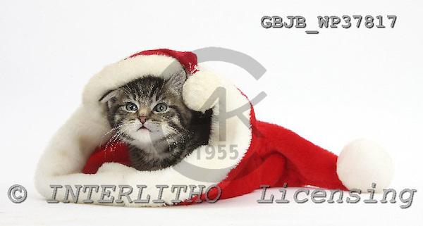 Kim, CHRISTMAS ANIMALS, photos, GBJBWP37817,#XA# stickers