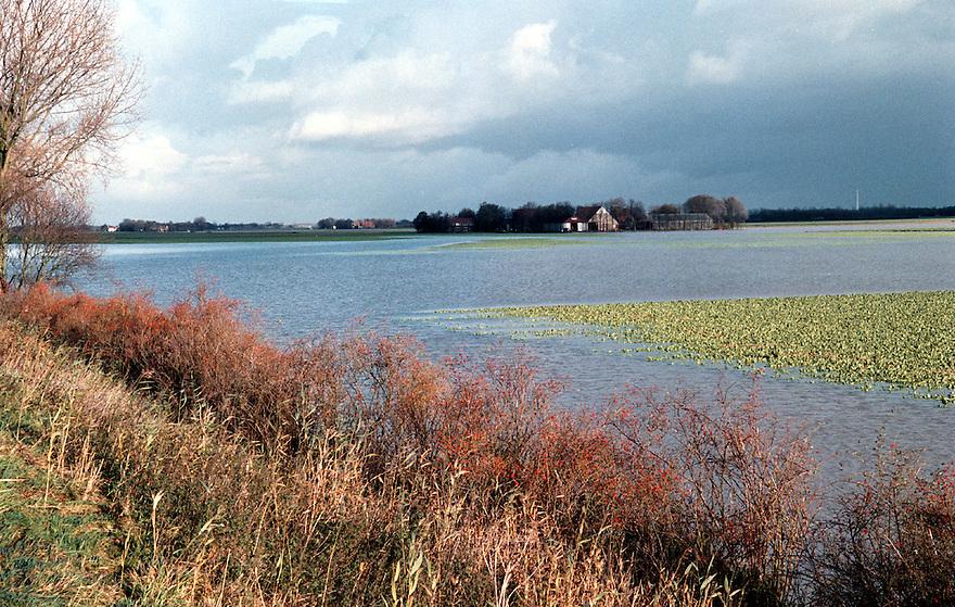 Tollebeek, 30-10-1998.Wateroverlast. Ondergelopen bietenveld..Foto (c) Michiel Wijnbergh/Hollandse Hoogte