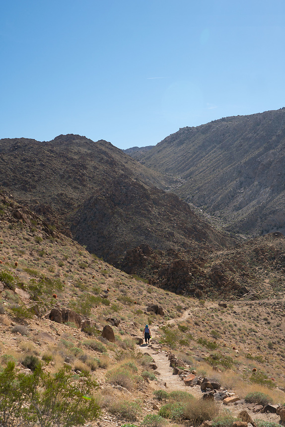 Hiker on Fortynine Palms Oasis Trail, Joshua Tree National Park, California, US