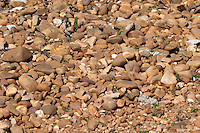 pebbly soil detail bodegas frutos villar , cigales spain castile and leon