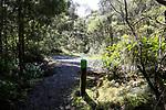 Waharau Regional Park, Bush Walk Loop track, 13 November 2018. Photo: Simon Watts/www.bwmedia.co.nz