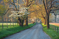 Spring along Sparks Lane, Cades Cove