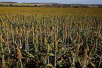 Capinopolis_MG, Brasil...Plantacao de sorgo em Capinopolis, Minas Gerais...The sorghum agriculture in Capinopolis, Minas Gerais...Foto: LEO DRUMOND / NITRO