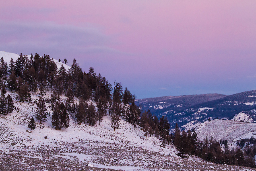Bluish-purple clouds cast a pastel glow over the landscape on a winter morning in Yellowstone National Park, Wyoming.