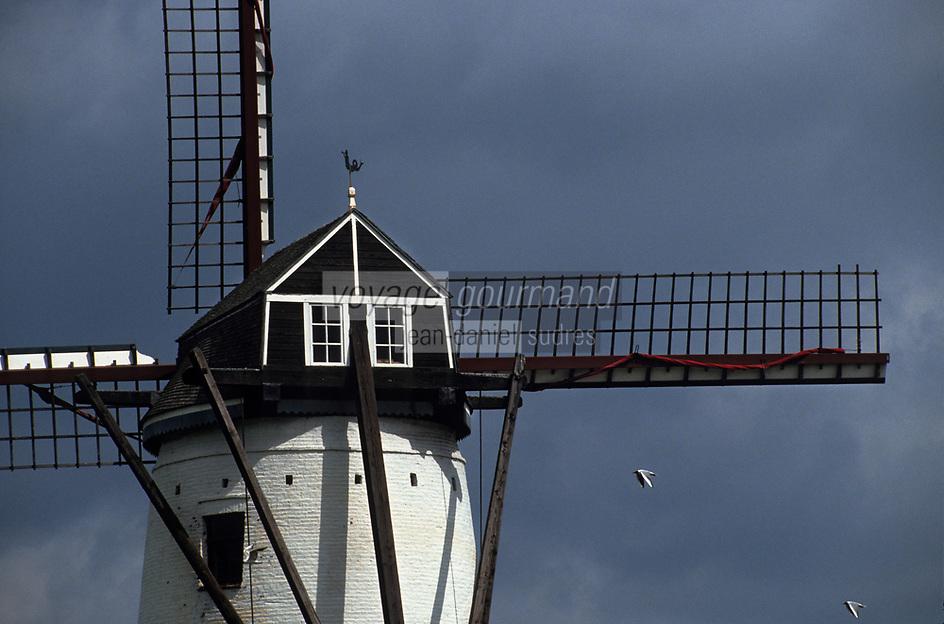 Europe/Belgique/Flandre/Flandre Occidentale/Env de Bruges : Moulin à vent aux environs de Damme