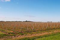 View over the vineyard with blue sky. Bodega Juanico Familia Deicas Winery, Juanico, Canelones, Uruguay, South America