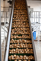 Industria alimenticia | Food industry