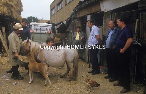 Johnny Pinto's horse yard. Hackney East London E8. Totters yard, Rag and Bone men.