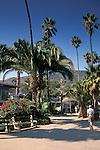 Palm trees at Two Harbors, Catalina Island, California Coast