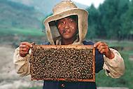 September, 1985. Shaanxi Province, China. Buckwheat flowers near Lijiawan village on the road from Zhidan to Yan'an. Farmers making honey from the flowers.