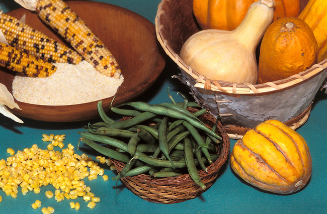 Like many of the Northeastern tribes, The Delaware Indians grew corn, beans and squash also known as the Three Sisters.
