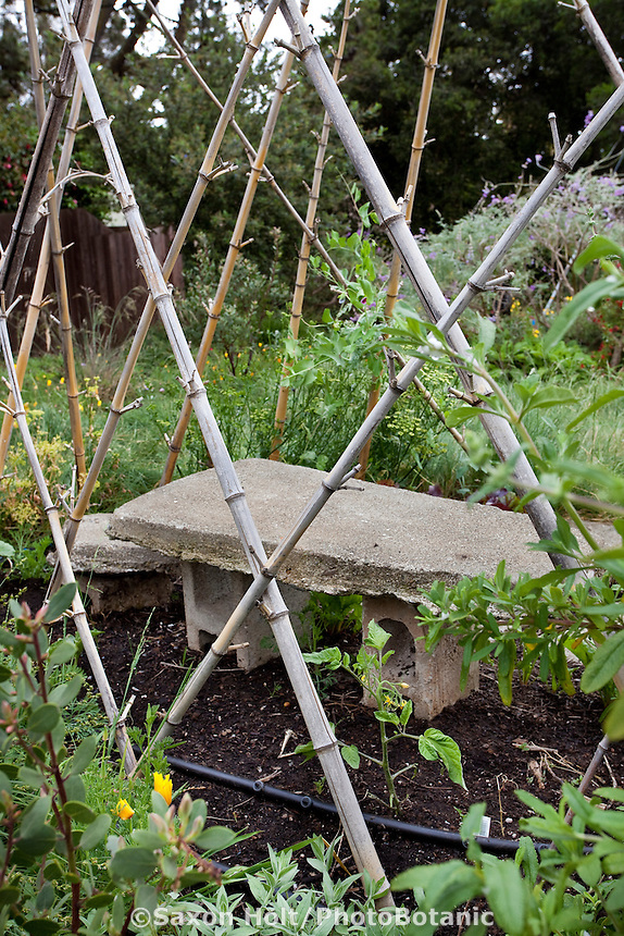 Recycled concrete bench within bamboo shelter support for climbing vegetables in California front yard garden