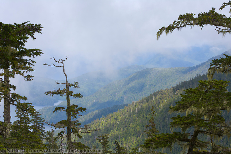Tongass National Forest, Baranof Island, Southeast Alaska panhandle.