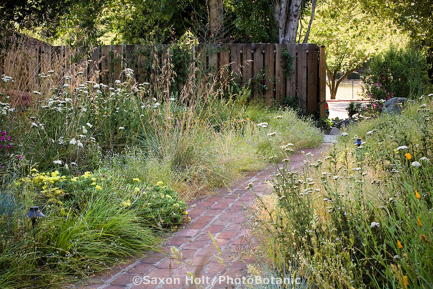 Brick path through California native plant front yard entry garden, lawn substitute meadow garden