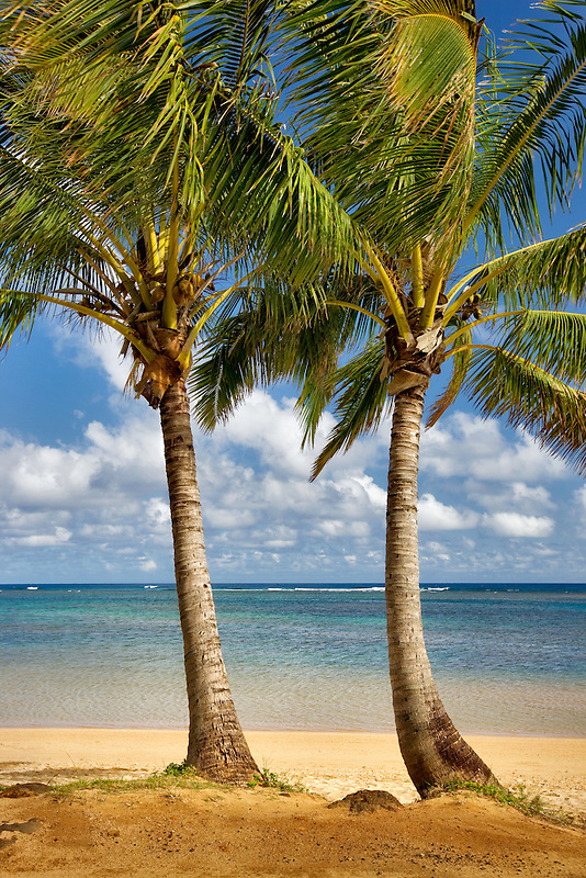 Two palm trees at Anini Beach. Kauai, Hawaii.