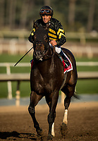 ARCADIA, CA - MARCH 11: Bal A Bali #1, ridden by Javier Castellano returns after the Frank E. Kilroe Mile Stakes at Santa Anita Park on March 11, 2017 in Arcadia, California. (Photo by Alex Evers/Eclipse Sportswire/Getty Images)