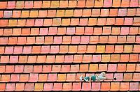SAO PAULO, SP, 09.02.2014 - CAMP. PAULISTA- PALMEIRAS X AUDAX - Torcida durante partida contra o Audax jogo valido plea setima rodada do Campeonato Paulista, no estadio Paulo Machado de Carvalho, o Pacaembu, regiao oeste de Sao Paulo, neste domingo, 09. (Foto: Levi Bianco / Brazil Photo Press).