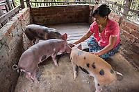 Pig Herder
