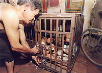Children, aged 3 and 5, are kept in a cage in a village house belonging to their uncle. The children's parents are both in prison and the uncle is too poor to afford child care for the children and are afraid they may be stolen a common problem in China and are afraid they may be stolen a common problem in China...PHOTO BY SINOPIX