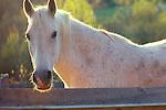 Horses- Portrait