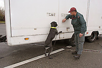 A Swiss Gardes Frontière and his sniffing dog, checking a UK lorry at Bardonnex customs border, between Switzerland and France in Geneva province..They work together in different customs border, car patrol, train patrol and at the international Geneva airport..The dog call Virus (it was V year, say the dog master) have been train to find all type of drogue.