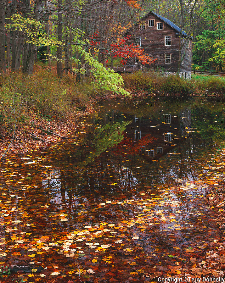 Delaware Water Gap NRA, NJ:  Millbrook Mill reflecting on a small pond covered with autumn leaves, Millbrook Village historic site