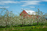 Johnston's Orchards in Ellsworth,  Maine, USA