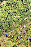 A group eradicate coca plants at the Antioquia mountains In Colombia so far this year have been eradicated 900 hectares in the country, mainly in rural areas, there are about 2,500 men engaged in this work. According to the Presidential Program for Comprehensive Action against Antipersonnel Mines, between 1990 and January 31, 2012, have been affected by landmines l9.642 people, of these, 674 were injured in eradication. Medellín, July 3 of 2012. Photo by Fredy Amariles/ VIEWpress.