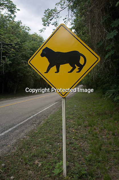 "A ""Beware of the Pumas"" road sign in the Parque Nacional Tikal, Guatemala. In actual fact, the motorist would be incredibly fortunate to catch a sight of these elusive animals."