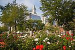 Rose Kennedy Rose Garden in full bloom in Boston, MA, USA