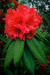 4.16.18 - Bloomin' In The Rain....